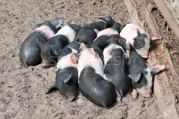 Enrolado outro adormecido família comida bebê Foto stock © Mazirama
