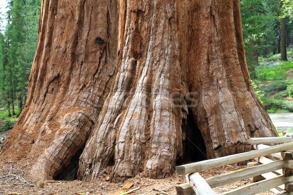 巨人 ヨセミテ国立公園 旅行 森 米国 ストックフォト © mblach