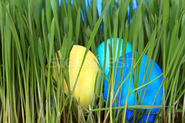 Сток-фото: пасхальных · яиц · глубокий · трава · весны · природы · фон