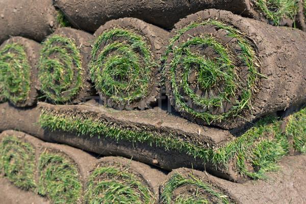 Tekercsek friss fű szőnyeg kosz gyep Stock fotó © mblach