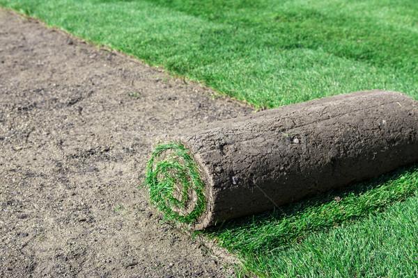 Foto stock: Nuevos · césped · hierba · fondo · alfombra