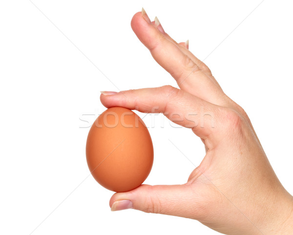 hand and egg Stock photo © mblach