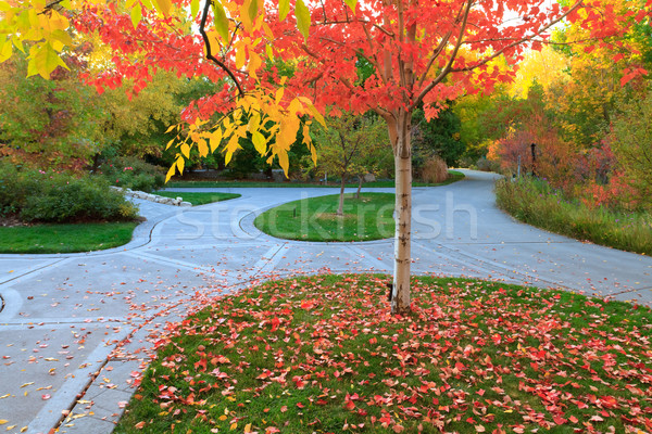 fall Stock photo © mblach