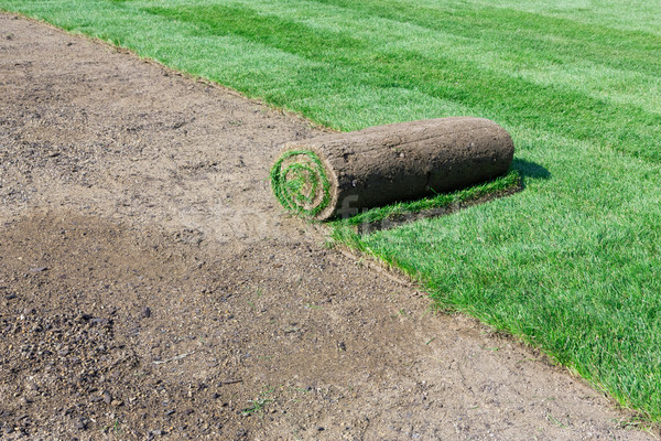 New lawn Stock photo © mblach