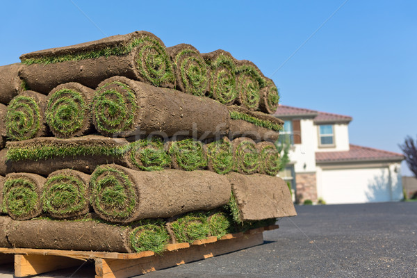 Sod rolls Stock photo © mblach