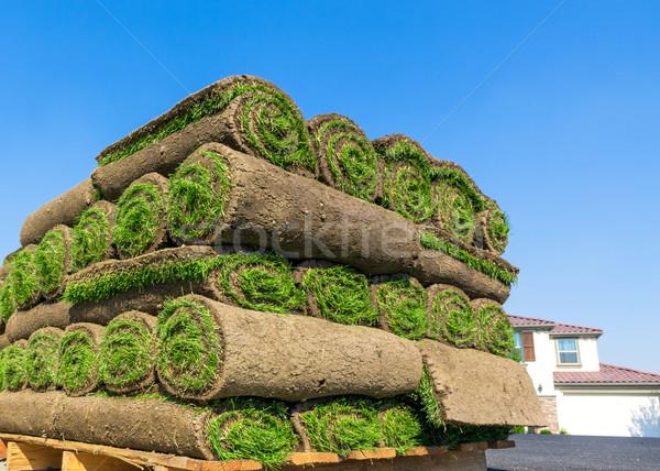 Stock photo: New lawn