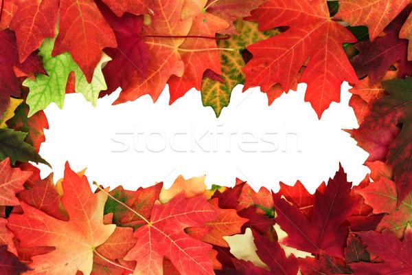 ősz copy space textúra természet terv űr Stock fotó © mblach
