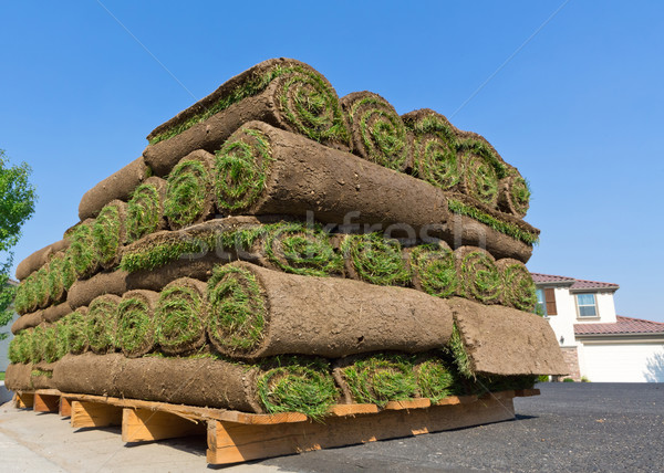 Vers gras tapijt vuil gazon Stockfoto © mblach