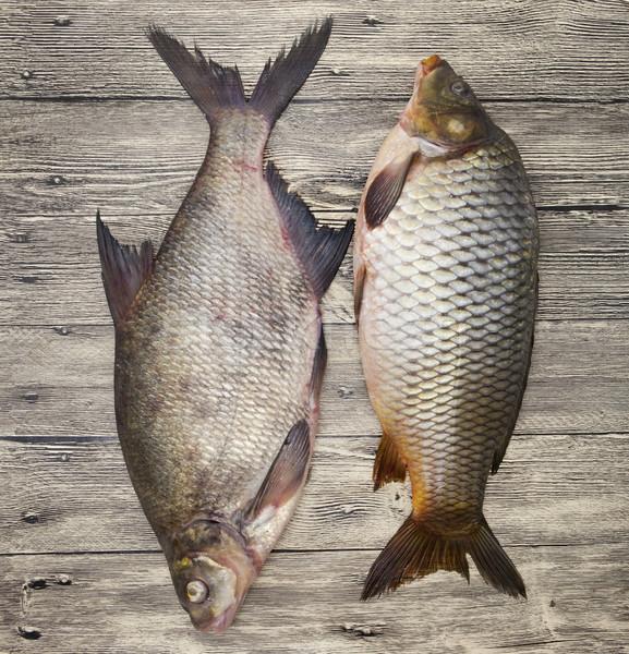 Twee groot vers karper live vis Stockfoto © mcherevan