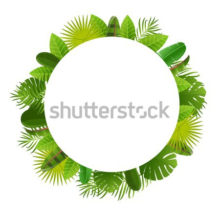 Tropical leaves frame. Floral jungle design background. Palm, banana, frangipany, monstera, strelitz Stock photo © mcherevan