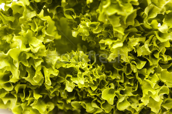Green fresh linking of lettuce salad close up. The best healthy breakfast for the modern person. Stock photo © mcherevan