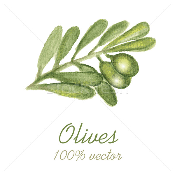 Watercolor painted olive tree branch. Stock photo © mcherevan
