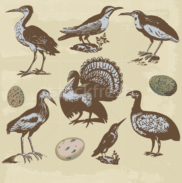 Vintage birds illustrations. Vector set Stock photo © mcherevan