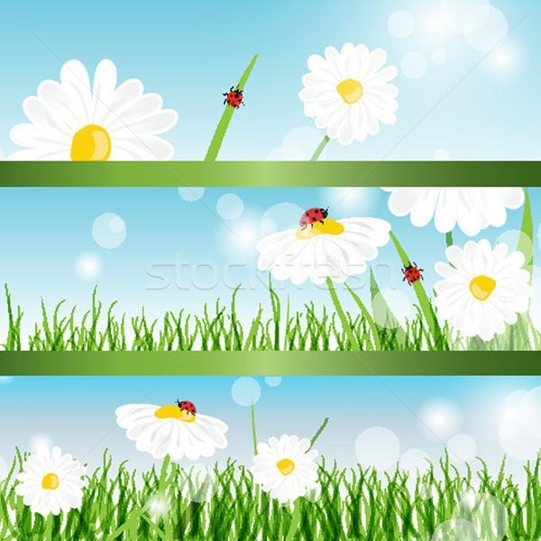 été bannières Daisy coccinelles herbe verte herbe Photo stock © mcherevan