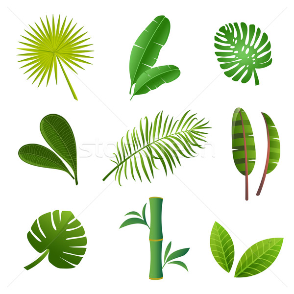 Tropical plants set. Vector illustration of green leaves.  Stock photo © mcherevan