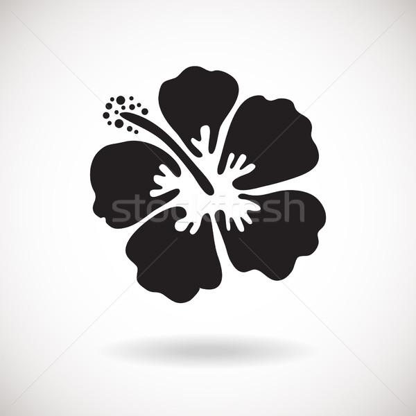 Fekete hibiszkusz virág fehér konzerv használt Stock fotó © mcherevan