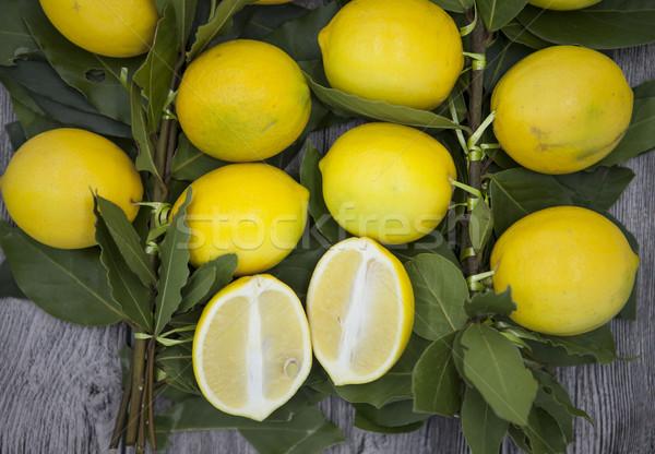 Ramo fresco suculento limões natureza Foto stock © mcherevan