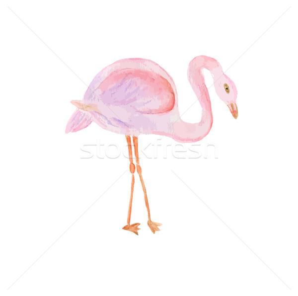 水彩画 描いた 実例 フラミンゴ ベクトル フォーマット ストックフォト © mcherevan