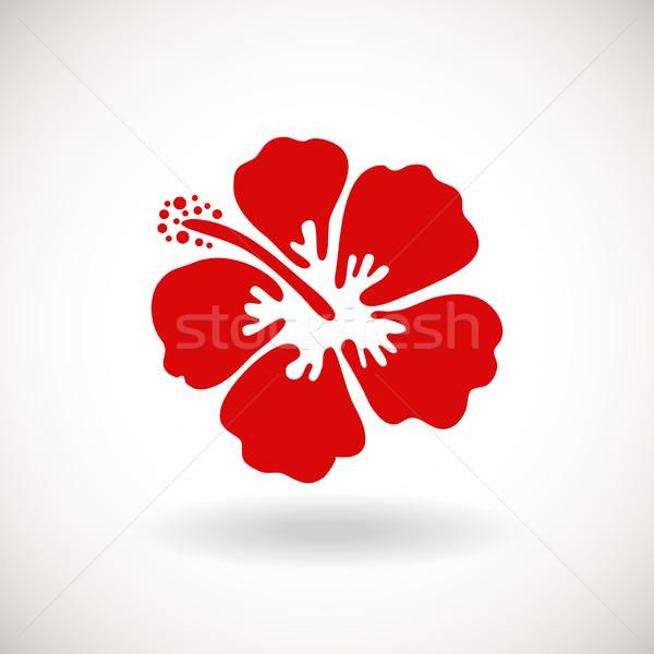 Kırmızı ebegümeci çiçek beyaz can kullanılmış Stok fotoğraf © mcherevan