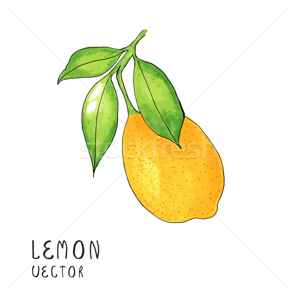 Lemon tree branch, watercolor painting on white background, vector illustration Stock photo © mcherevan