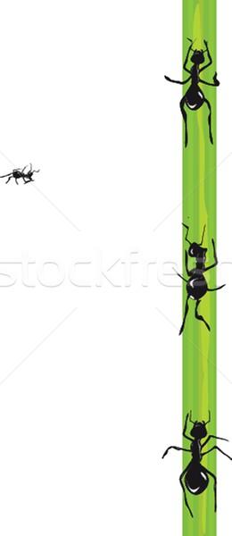Ants. Vector. Stock photo © mcherevan