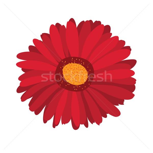 Large pink flower gerbera on background Stock photo © mcherevan