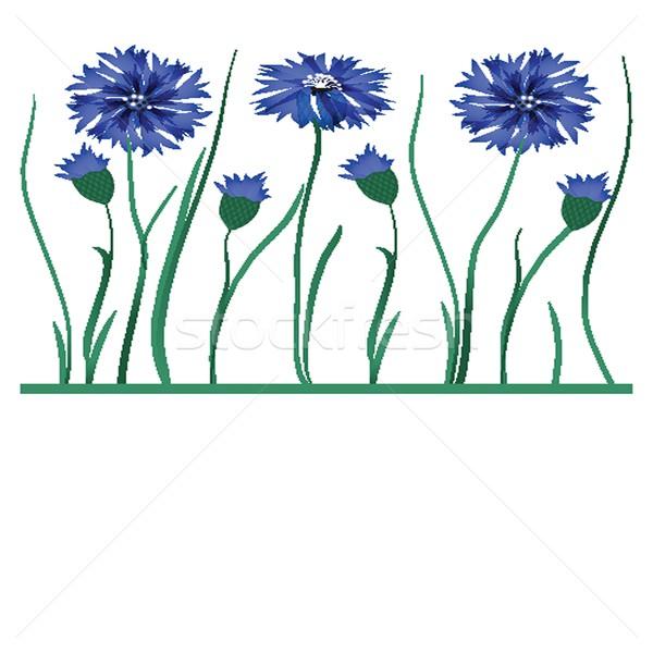 Stockfoto: Mooie · Blauw · geïsoleerd · witte · voorjaar