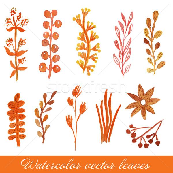 Сток-фото: акварель · окрашенный · вектора · цветочный · набор · цветы