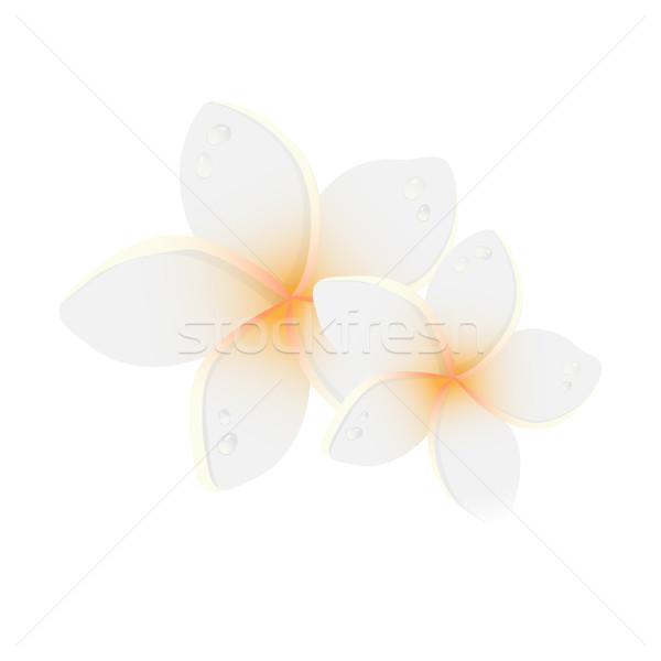 Witte twee bloemen bloem spa Stockfoto © mcherevan