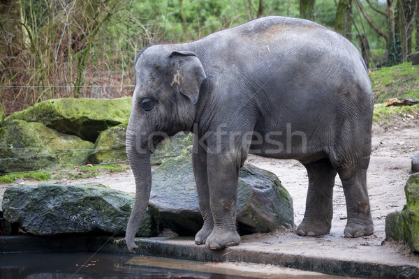 Képzett elefánt nap dzsungel dolgozik indiai Stock fotó © mcherevan