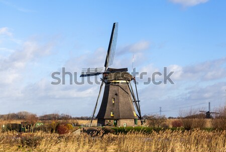 Thickets of a cane on the background of the Dutch wind mill. Stock photo © mcherevan