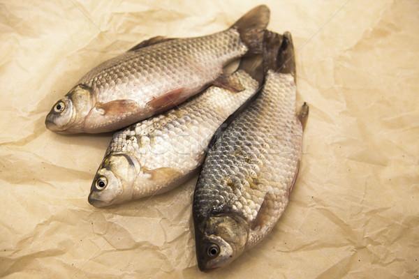 Stock photo: A  fresh carp live fish lying on a on paper background . Live fish crucian Carassius auratus gibelio