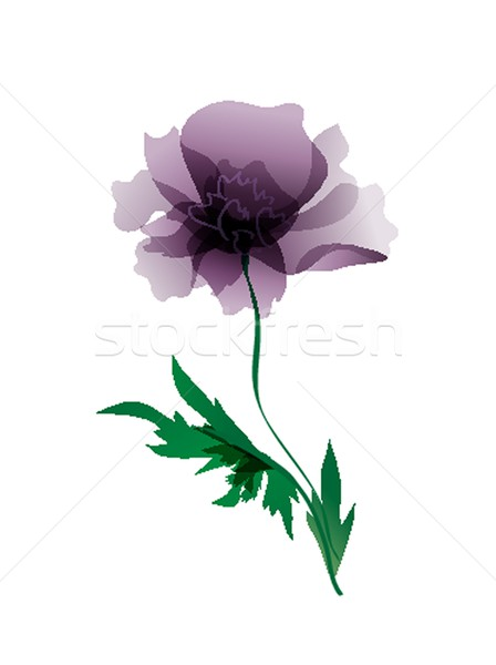 Luxurious  peony flower painted in pastel colors. painting Stock photo © mcherevan