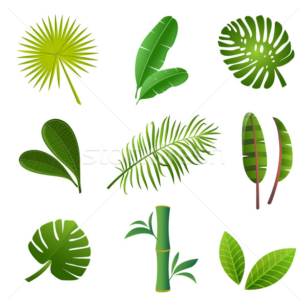 Stock photo: Green tropical leaves set. Tropical plants set.