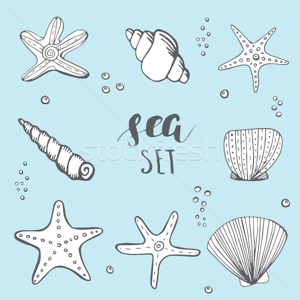 Sea shell background Stock photo © mcherevan