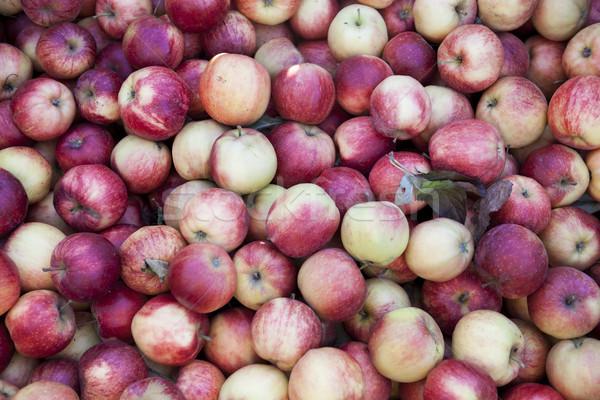 Fresche rosso mele mercato molti Foto d'archivio © mcherevan