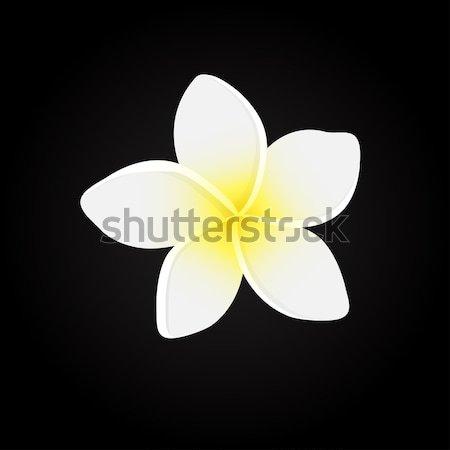 Vector illustration of white Frangipani flowers Stock photo © mcherevan