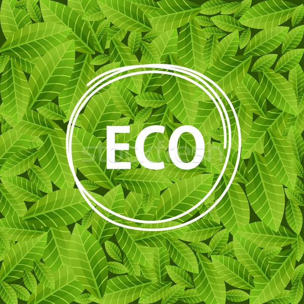 Foglie verdi parola eco cerchio frame ecologico Foto d'archivio © mcherevan