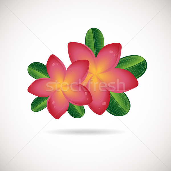 Pink plumeria flower. Vector illustration of Two Frangipani flowers with green leaves on white backg Stock photo © mcherevan
