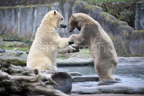 Kettő férfi sarki medvék verekedés falat Stock fotó © mcherevan