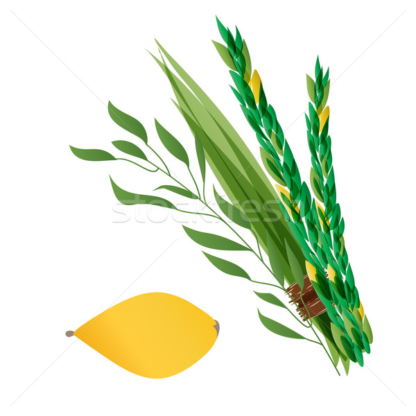 Vetor illustration of four species - palm, willow, myrtle , lemon - symbols of Jewish holiday Sukkot Stock photo © mcherevan