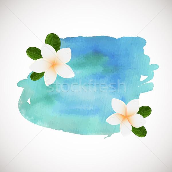 White plumeria flower logotype. Vector illustration of white Two Frangipani flowers with green leave Stock photo © mcherevan