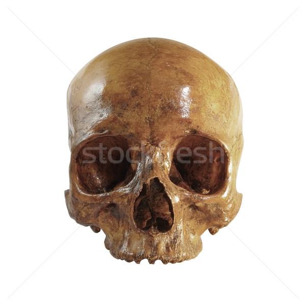 Koponya elöl kép arc halál halott Stock fotó © Mcklog