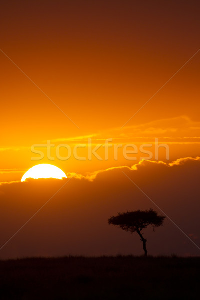 A New Day Stock photo © mdfiles