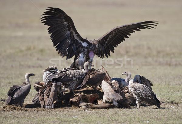 Grup göl park cumhuriyet Kenya kuşlar Stok fotoğraf © mdfiles
