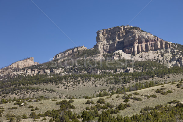 Tombe shell grand corne montagnes Wyoming Photo stock © mdfiles
