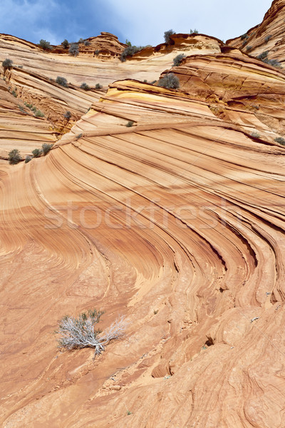 Sandstone Swirl Stock photo © mdfiles