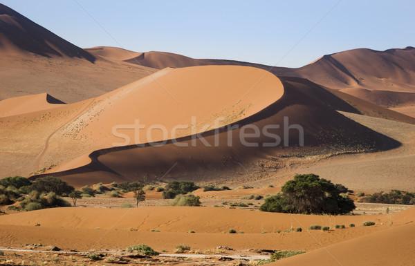 Park Namibya güney Afrika doğa kum Stok fotoğraf © mdfiles