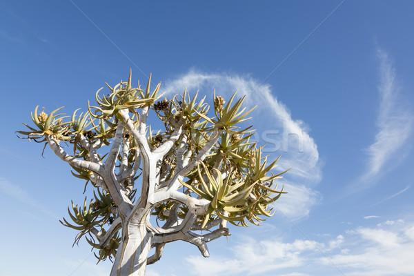 Fa felhő Namíbia déli Afrika Stock fotó © mdfiles