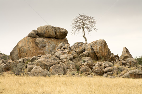 Boulders and a tree Stock photo © mdfiles